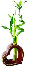 Set of 2 Live Spiral 3 Style Lucky Bamboo Plant Arrangement withHeart Shape Vase