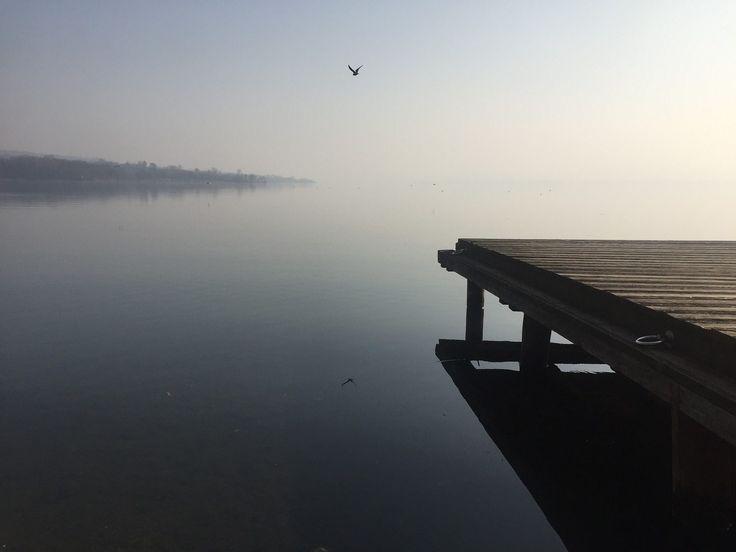 lago, calma, muelle, embarcadero, gaviota, reflejo, niebla, 1705312150