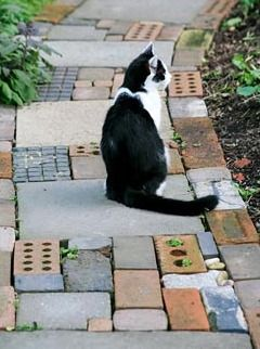 Cat sitting on cottage garden style path made from salvaged materials