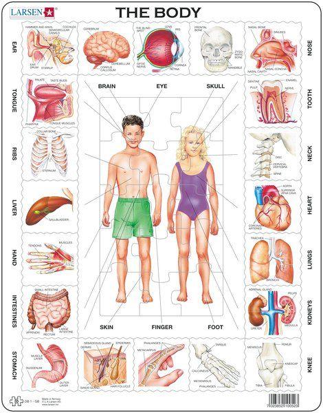 OB1 - Ludske telo