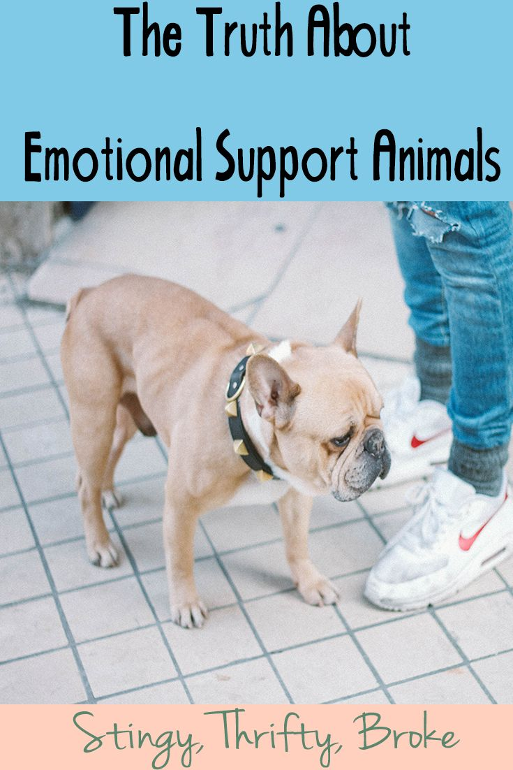 The Truth About Emotional Support Animals