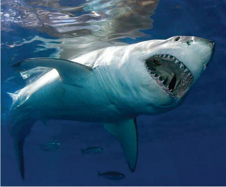 sharks | ... find a single picture or even a mention of a shark and sharks places