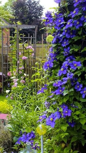 Rustic arbor with roses, clematis and daisies by elisa