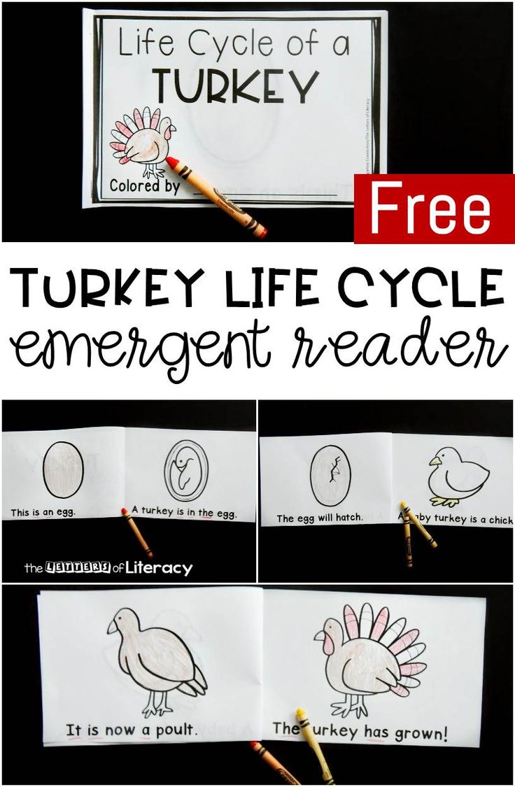 Best 25 turkey facts ideas on pinterest facts about turkey life cycle of a turkey free printable emergent reader pooptronica