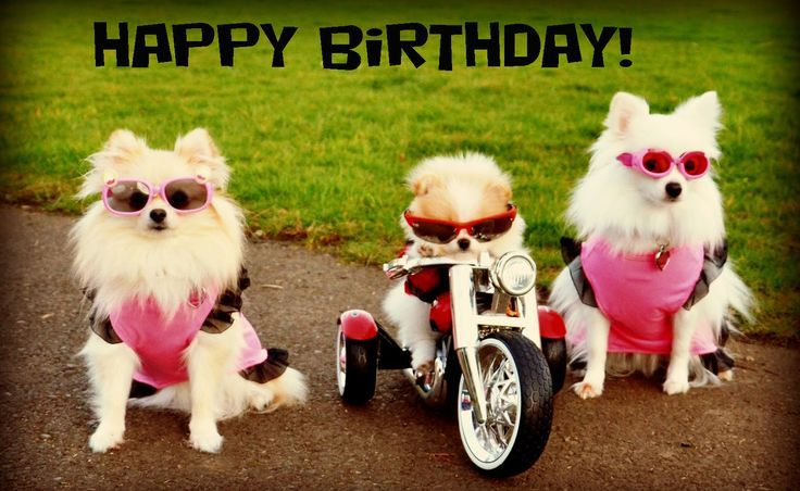 17 Best Ideas About Happy Birthday Dog On Pinterest