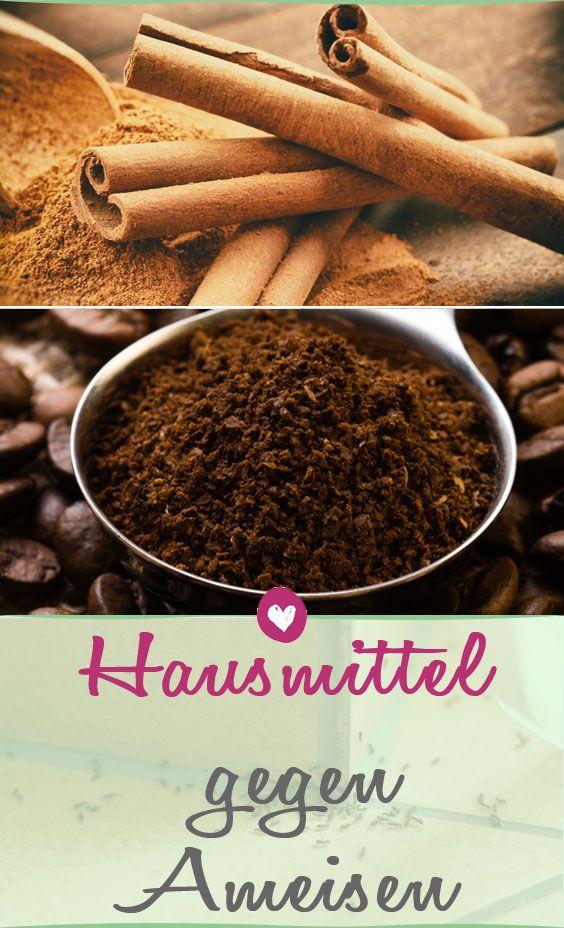 25+ parasta ideaa Pinterestissä Ameisen im garten Hausmittel - was hilft gegen ameisen in der küche