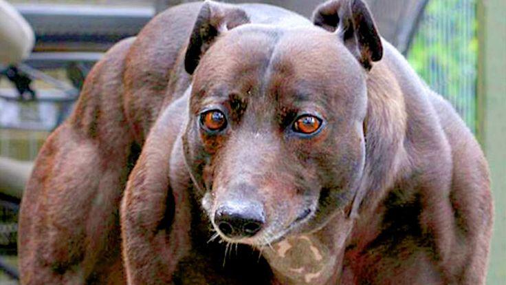''10 Most Unusual Pets Ever'' link: https://youtu.be/5HAMv_okbfc