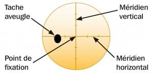 Figure 2. Champ visuel normal (œil gauche)