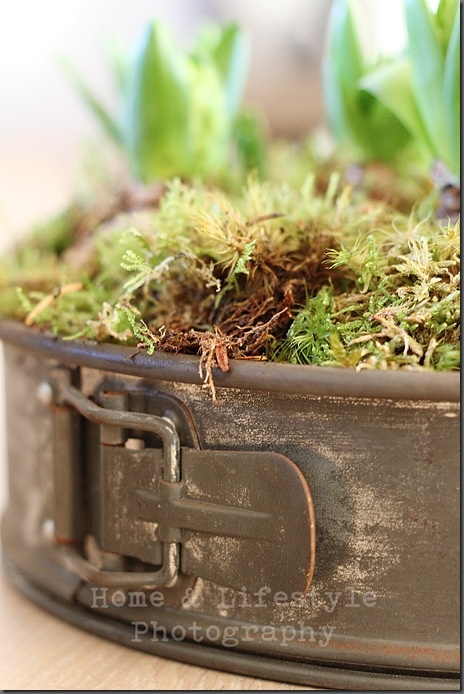 For herbs in the kitchen, reuse old cake tins! Smart idea.