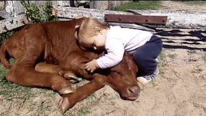 They love hugs and lying in the sun. They even love doing both at the same time! | 21 Reasons Why Cows Are Basically Just Really Big Dogs
