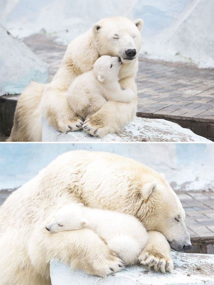 Love between parents and cubs is always deeply emotional