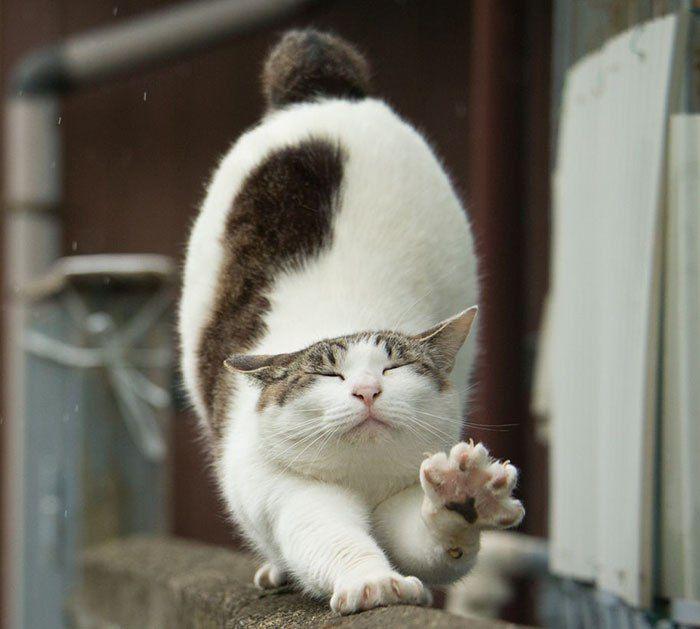 Бездомные коты от Масаюки Оки