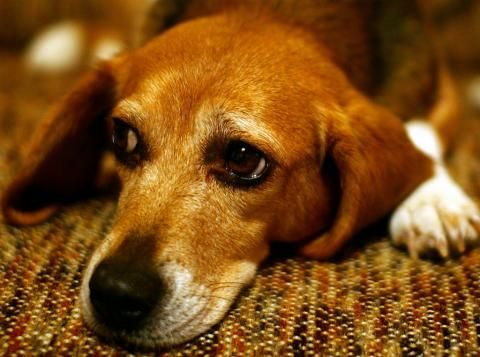 How To Get Rid Of Pet Odor ...From Urine...see more at PetsLady.com -The FUN…