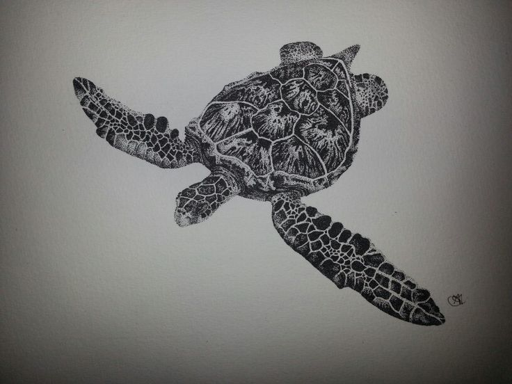 Sea turtle stippling