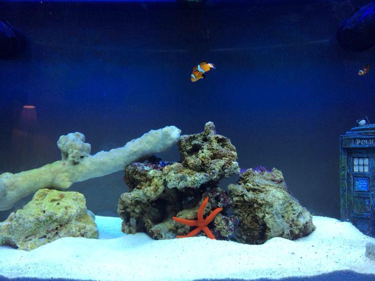 My marine fish tank :-)