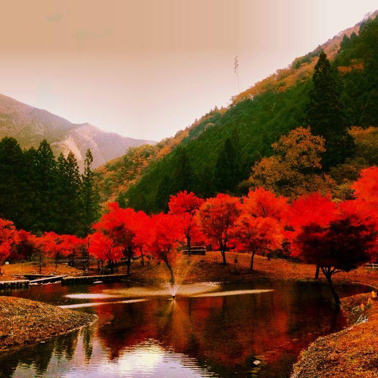 静岡 川根本町 寸又峡温泉  草履石公園 紅葉