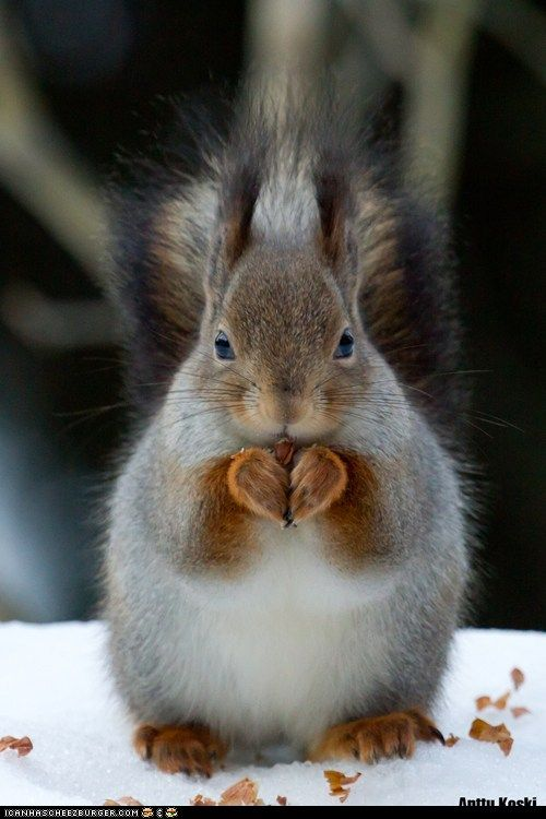 Look at his heart shaped hands/paws....he is saying....his prayers! ....Lord.....please help me find nuts!!