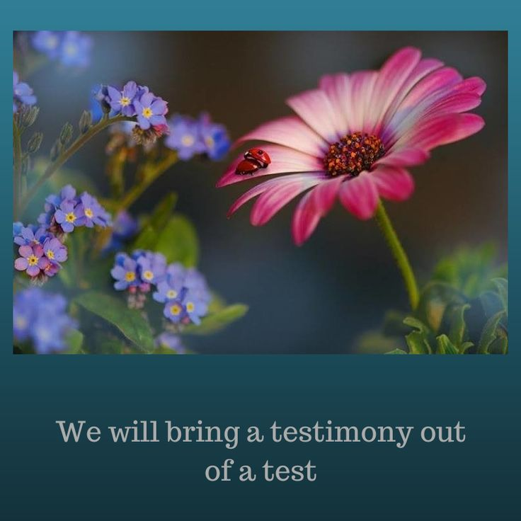 What a wonderful Blog that speaks to women's hearts.  We will bring a testimony out of test.  That has been the case in the lives of many!