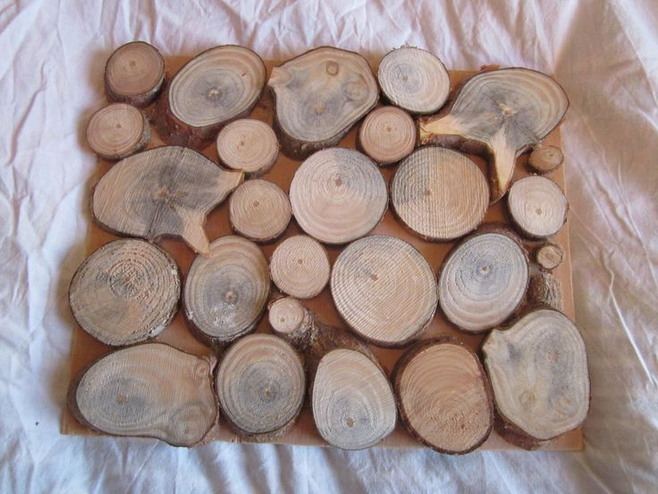 houten schijven op bord No. 1 gezaagde schijven van tak, gelijmd op ...