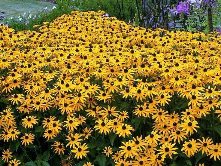 (in) Foto: Flores Bonitas: Qual a Flor mais bela do Mundo?