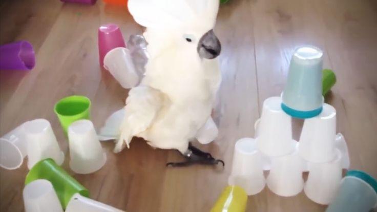 Funny Parrots 2017 🐦Fun Parrot Tricks [Epic Laughs]