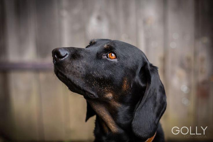 Pies - jaki jest każdy widzi 🐶 🐾 #dog #dogs #dogoninstagram #dogoninsta #dogphotographer #dogphotography #dogphoto #animal #animals #dogphotooftheday #hund #hundefotografie #hundefoto #pies #zwierzęta #portraitfestival