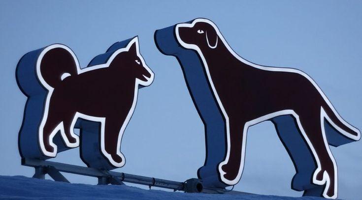 Koiria Rohki-hallin katolla Pellossa