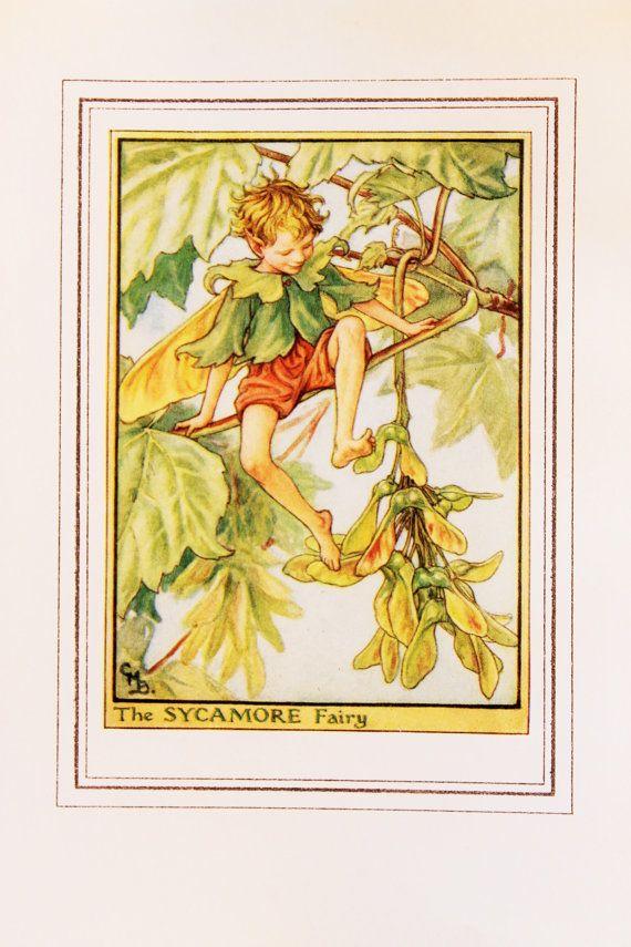 Sicomoro albero fata - 1930s Vintage Flower Fairy stampa originale di Cicely Mary Barker