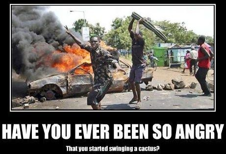 Have you ever been so angry that you started swinging a cactus? lol that's hilarious