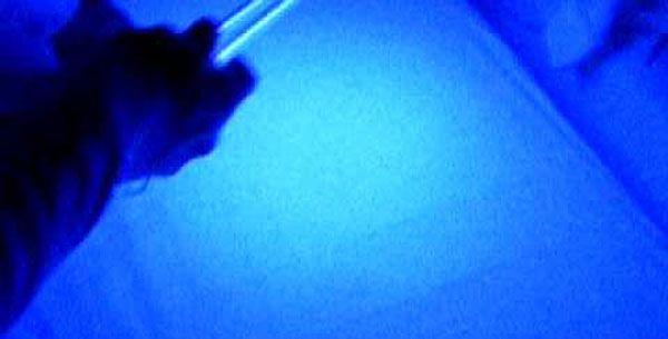 """Dormite spesso in albergo? La trasmissione fa una scoperta (disgustosa): ecco cosa hanno trovato sulle lenzuola """"pulite"""" - http://www.sostenitori.info/dormite-spesso-in-albergo-la-trasmissione-fa-una-scoperta-choc-ecco-cosa-hanno-trovato-sulle-lenzuola-pulite/227458"""