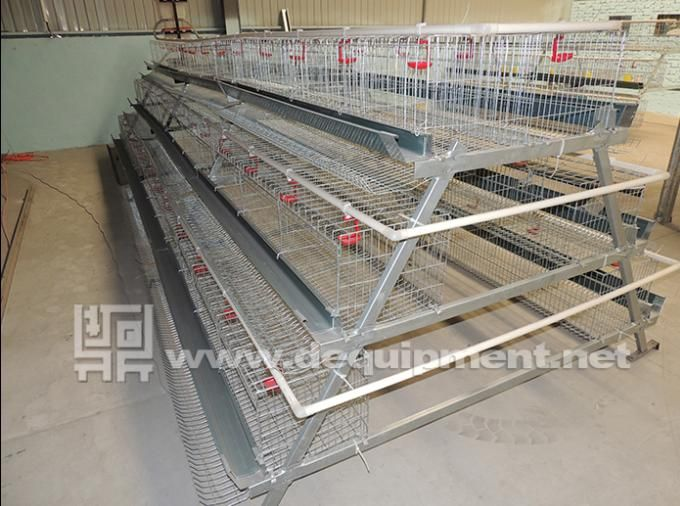 3tiers of 120 birds layer chicken cage Sample-Hebei Dingtuo Machinery And Equipment Co., Ltd