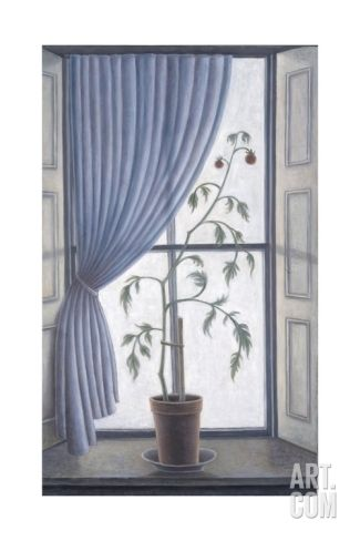Plant in Window, 2003 Giclee Print by Ruth Addinall at Art.com