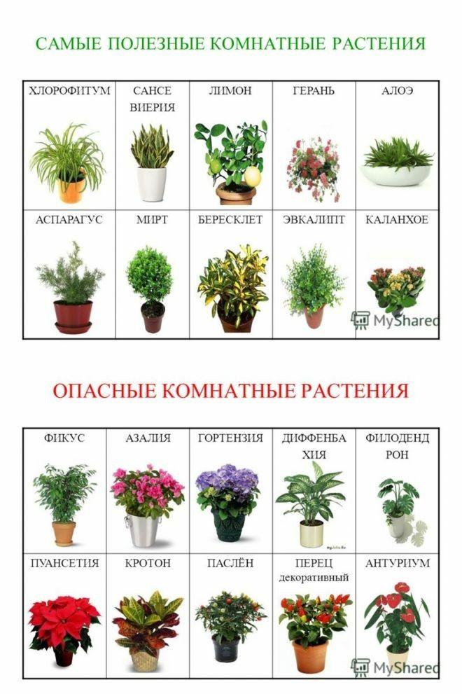 люфтят названия домашних растений с картинками наше