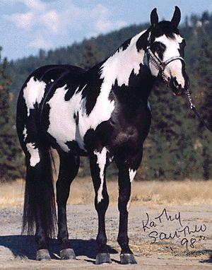 She looks like my black and white paint horse that died ...