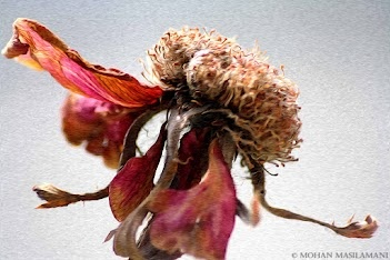 """""""Dying Rose"""" by Mohan Masilamani #paintography"""