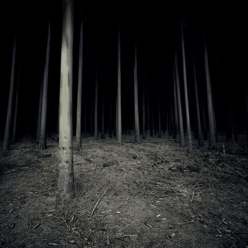Dark Scary Forest | woods dark forest night scary horror ...