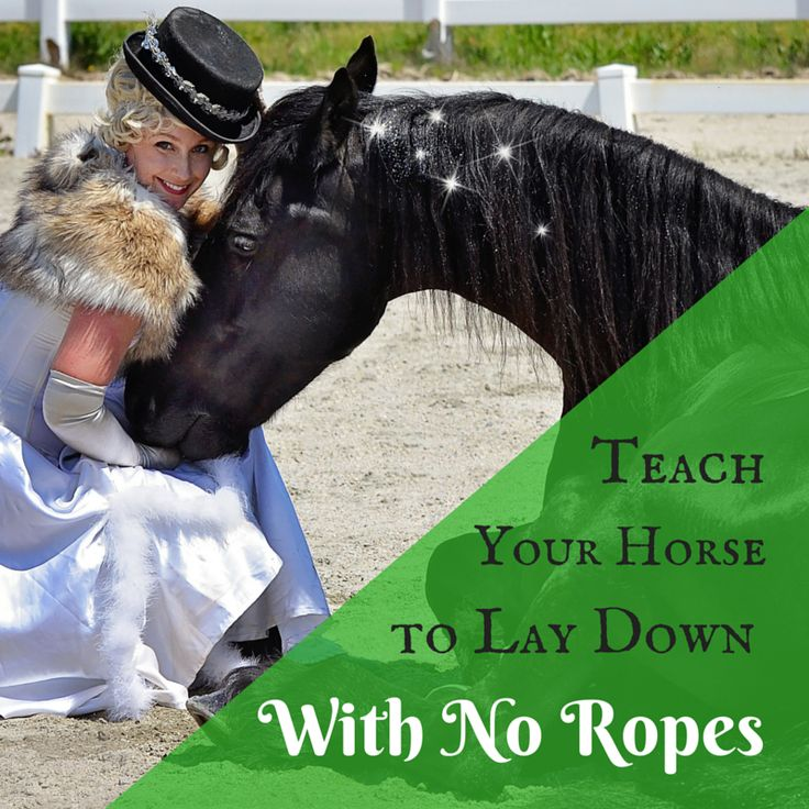 Teach your horse to lay down WITH NO ROPES