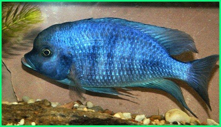 Unduh 530 Koleksi Gambar Ikan Berwarna Terbaru