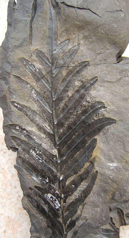 Multi-Wear Wrap - Fossil Fern by VIDA VIDA 201gd