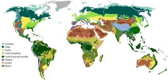Quels sont les différents climats ? Cet article vous propose de découvrir les sept principaux biomes (vaste région biogéographique s'étendant sous un même climat) présents sur Terre ! Deux astuces vous seront proposées lors de cet article, l'unepourfaire la différence entre Toundra et Taïga, l'autre entreSteppe et Savane ! La Toundra : - La toundraest principalement située dans l'extrême nord de l'hémisphère Nord, mais aussi dans l'hémisphère austral (le plus au su...
