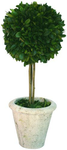 1000+ images about DIY Topiary on Pinterest