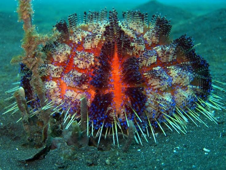 Sea Urchin by Ali Watters
