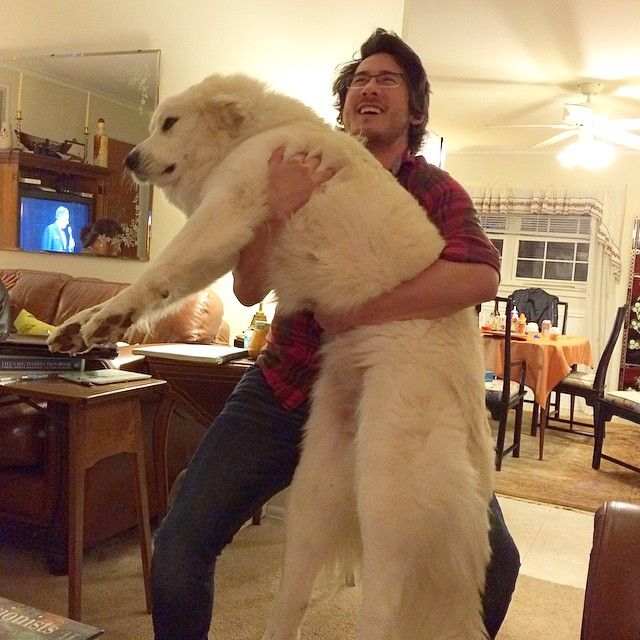Mark, that dog is as tall as you. Drop it Mark. Droooop it, droooop it. Good boy!