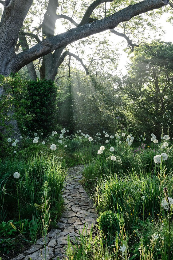 Beautiful natural gardens - Serene Woodland Garden With White Allium And Stone Pathway