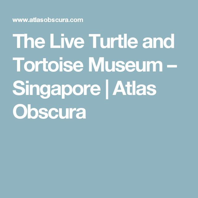 The Live Turtle and Tortoise Museum – Singapore | Atlas Obscura