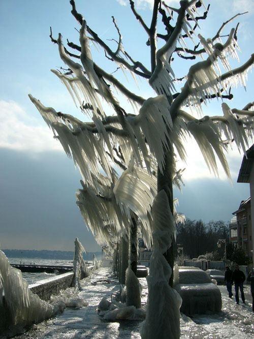 Dramatic Ice Storm,Geneva, Switzerland January 2005