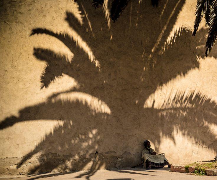 https://flic.kr/p/xzffTT | A l'ombre du palmier |  Le ciel est, par-dessus le toit, Si bleu, si calme ! Un arbre, par-dessus le toit, Berce sa palme. [...]  Mon Dieu, mon Dieu, la vie est là Simple et tranquille. Cette paisible rumeur-là Vient de la ville.  Qu'as-tu fait, ô toi que voilà Pleurant sans cesse, Dis, qu'as-tu fait, toi que voilà, De ta jeunesse ?  Paul Verlaine: