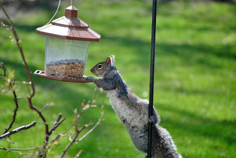 how to stop squirrels from bird feeder
