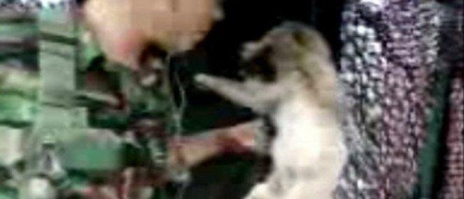 Argentina Expulsen al soldado coreano que uso a un perro como saco de boxeo! / Ausschluss des koreanischen Soldaten, der einen Hund als Boxsack benutze!/ Expel the Korean soldier who use a dog as a punching bag! www.sosvox.org/...
