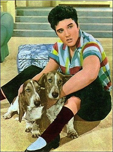 They drool, but Elvis loved them. If you were E, you hired a drool cleaner.